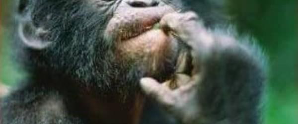 """Link al EDITORIAL """"Es preciso recordar a esos que desprecian a los animales que lo mismo que ellos fueron amamantados por su Madre, el pero lo fue también por la suya y que la piedad, única base de la moral, nace del sentimiento de la identidad de todos los seres humanos y de todos los seres vivos y debe extenderse a los animales"""" Arthur Schopenhauer, 1819 Autor: Álvaro G. Molinero1 1. Licenciado en Biología y Postgrado en Biodiversidad: conservación y evolución REFERENCIAS: Diamond, J., & Bond, A. B. (1999). Kea, bird of paradox: the evolution and behavior of a New […]"""